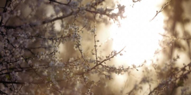 through_the_tree_by_fortuneseeksthesun63_de38ooi-fullview